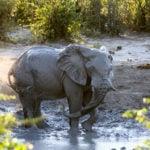 Elephant Sands Adventure Lodge Elephant