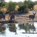 Elephant Sands Wildlife