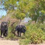 Kigelia Wildlife