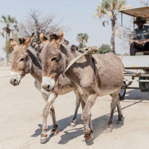 Donkey cart tour